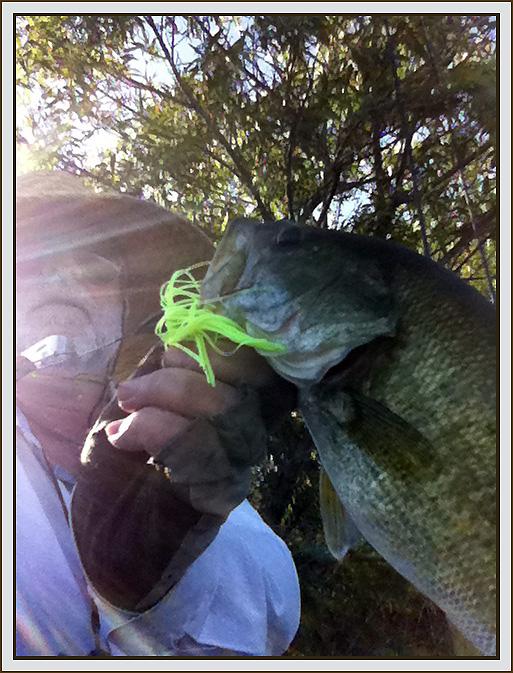 2011 july dec reports for Lake skinner fishing report